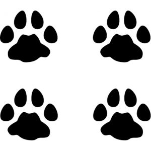 Bobcat Tracks Decal