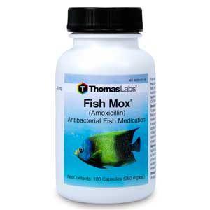 Fish Amoxicillin