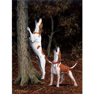 Music to my Ears - English Hound Print - by Robert W Hickman