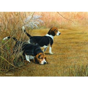 Through Thick and Thin- Beagles Print - by Robert W Hickman