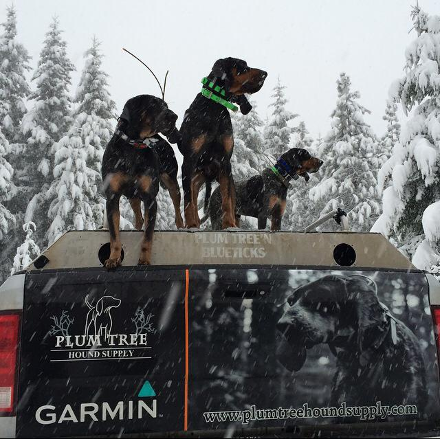 Hounds on the Plum Tree Truck